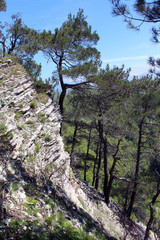 Деревья живописно растут на камнях, Орлинные скалы