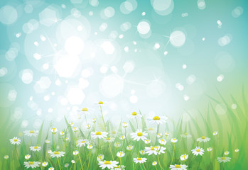 Vector summer nature bokeh background chamomiles field.