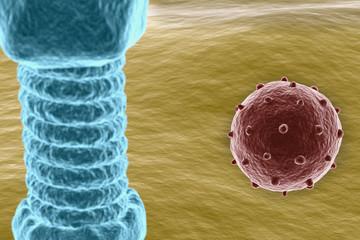 Virus on cell surface