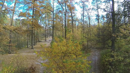 Up over  autumn wood in yellow color. Aerial