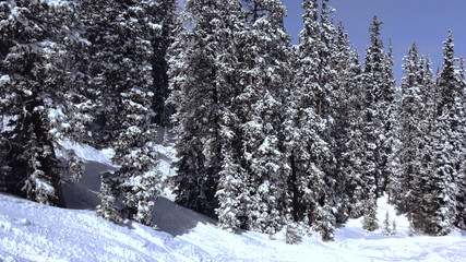 Deep Snow Covered Trees in The Mountains