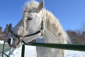 Лошадка с косичкой