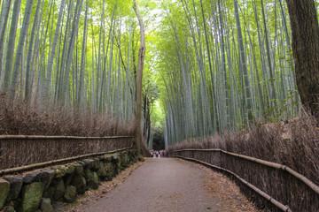 Arashiyama Bamboo Path, Japan