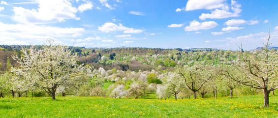 Obstblüte im Frühling - Baden Württemberg, Remstal
