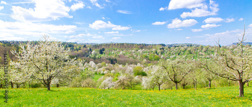 Leinwandbild Motiv Obstblüte im Frühling - Baden Württemberg, Remstal