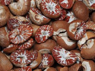 Dry betel Nut, betel palm