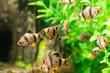 Leinwanddruck Bild - fish in an aquarium