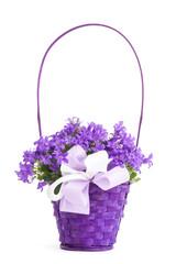 Cestino lilla con campanula fiorita isolata su sfondo bianco