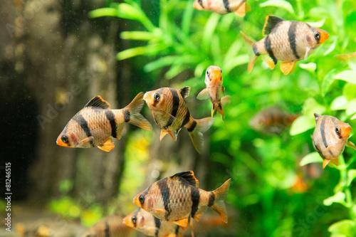 fish in an aquarium - 81246515