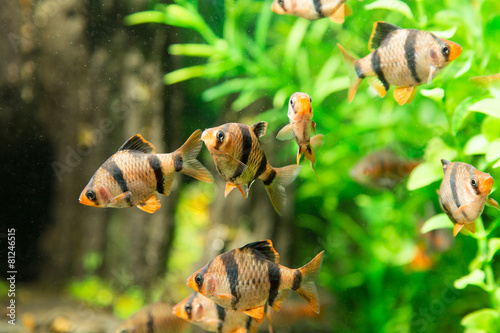 Leinwanddruck Bild fish in an aquarium