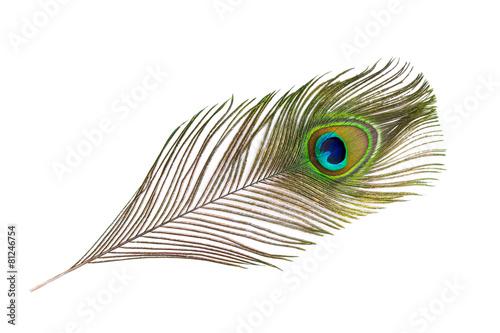 Foto op Plexiglas Vogel Pfauenfeder auf weißem Hintergrund