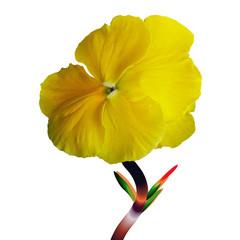 Fiore giallo in primavera