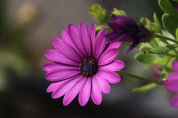 Flor morada en lo profundo