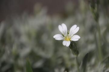 Flor blanca y gris