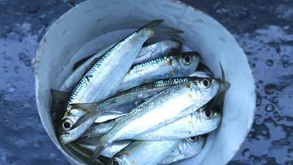 View of the fish caught in the ocean in Mirissa, Sri Lanka