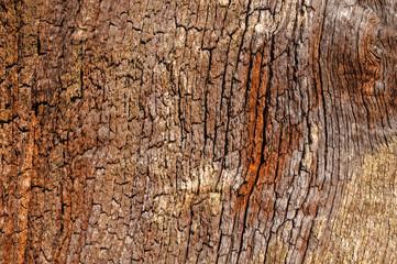Tree Bark Close up Background