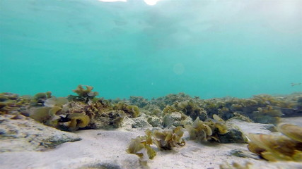 Underwater : clear sea water with moving grass