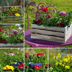 Frühlingsblumen Collage