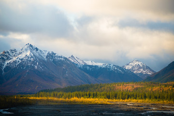 morning at denali national park
