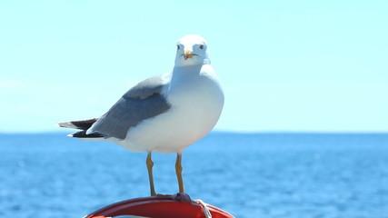Seagull sitting on sailboat railing enjoying the ride