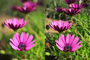 photos of purple flowers shot with different apertures