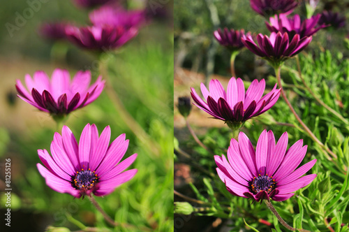 photos of purple flowers shot with different apertures - 81255126