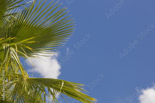 Papiers peints Palmier Majestic Tropical Palm Trees Against Blue Sky and Clouds