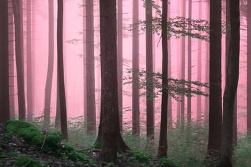 Dreamy purple color foggy woods