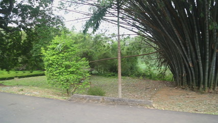 The view of the Botanical Garden in Kandy.
