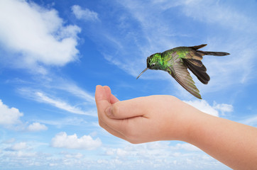 Green hummingbird hovering over a young hand against blue sky ba