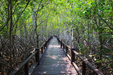 beautiful land scape of wood way bridge in natural mangrove fore