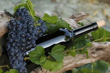 Bouteille de Vin et raisin