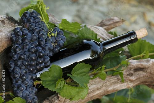 Bouteille de Vin et raisin - 81263373
