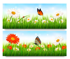 Summer nature banners with colorful flowers and butterfly. Vecto