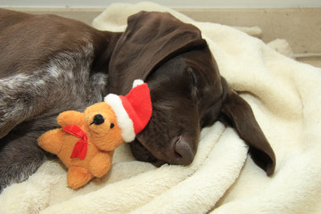 Dreaming of a dog's Christmas