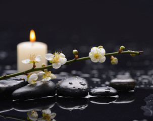 Cherry blossom, sakura flowers with candle on therapy stones