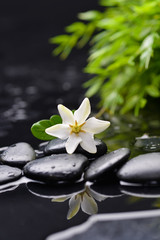 gardenia with green plant on therapy stones