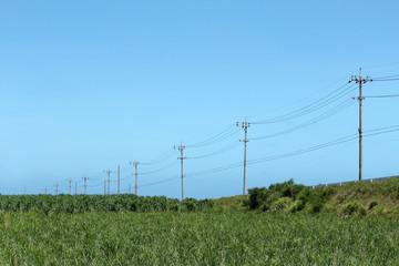 一列の電信柱