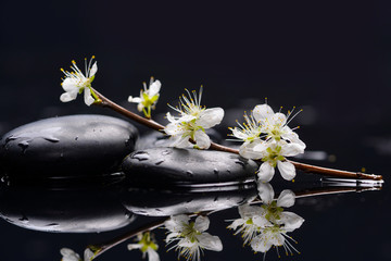 Spring peach blossom with therapy stones