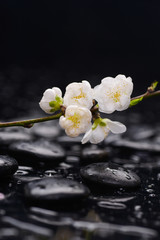 Set of Cherry blossom, with therapy stones