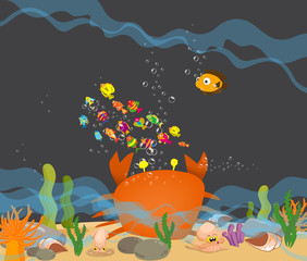 Crab big is under a sea water