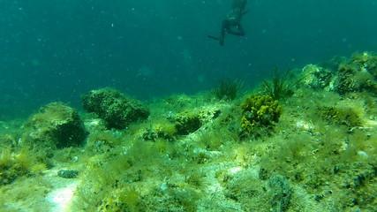 man spear fishing underwater in apnea