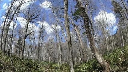 森の中の青空と雲・超広角レンズとジブアームを使用した動画_1
