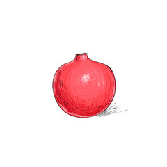 garnet fruit pomegranate sketch draw isolated over white