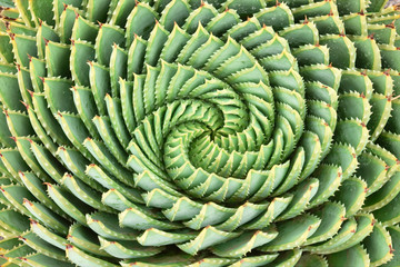 Pattern of spiral aloe