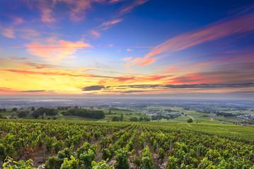 Vineyards and sunrise, Beaujolais, Rhone, France