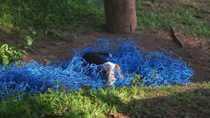 Puppy playing with blue net in nature