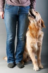 a trick dog;