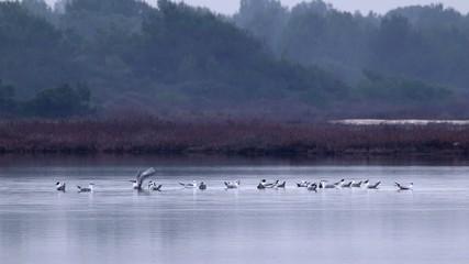 Uccelli sulla laguna