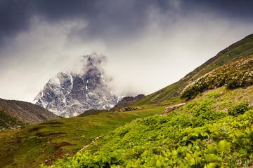 views of the alpine meadows